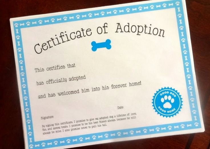 Adopt A Pet Certificate Template New 1000 Images About Puppy On Pinterest