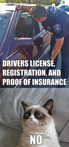 Auto Insurance Card Generator Beautiful Grumpy Cat On Pinterest