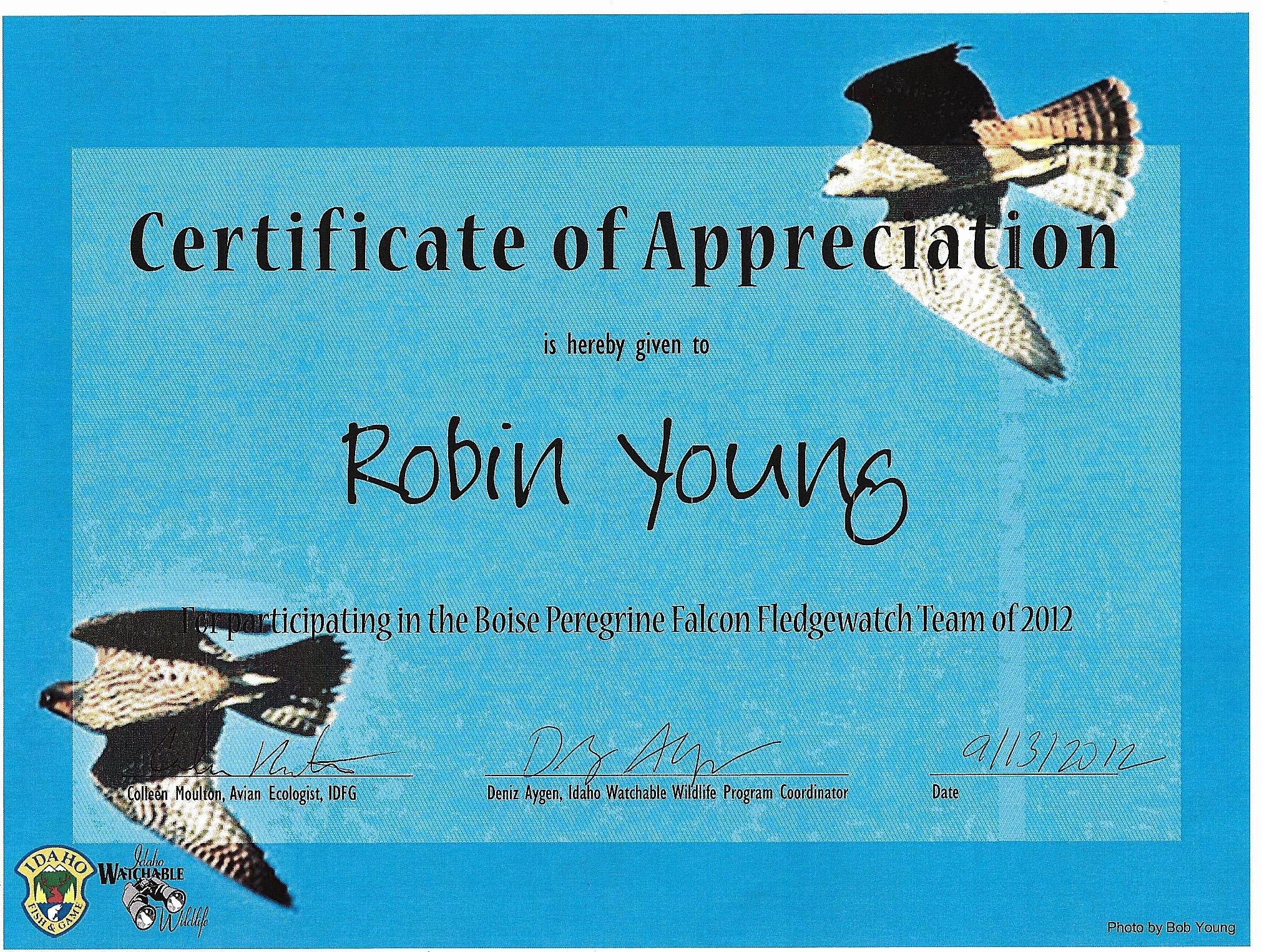 Blue Falcon Award Certificate Pdf Awesome Blue Falcon Award