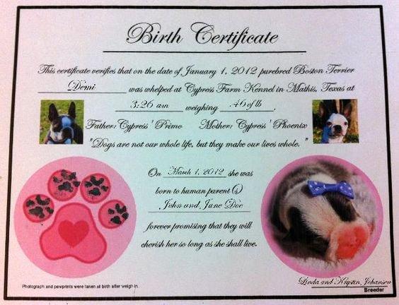 Build A Bear Birth Certificate Pdf Fresh Puppy Birth Certificates ] Puppies Pinterest