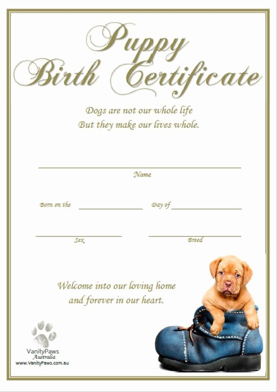 Build A Bear Birth Certificate Template Blank Inspirational Puppy Birth Certificate