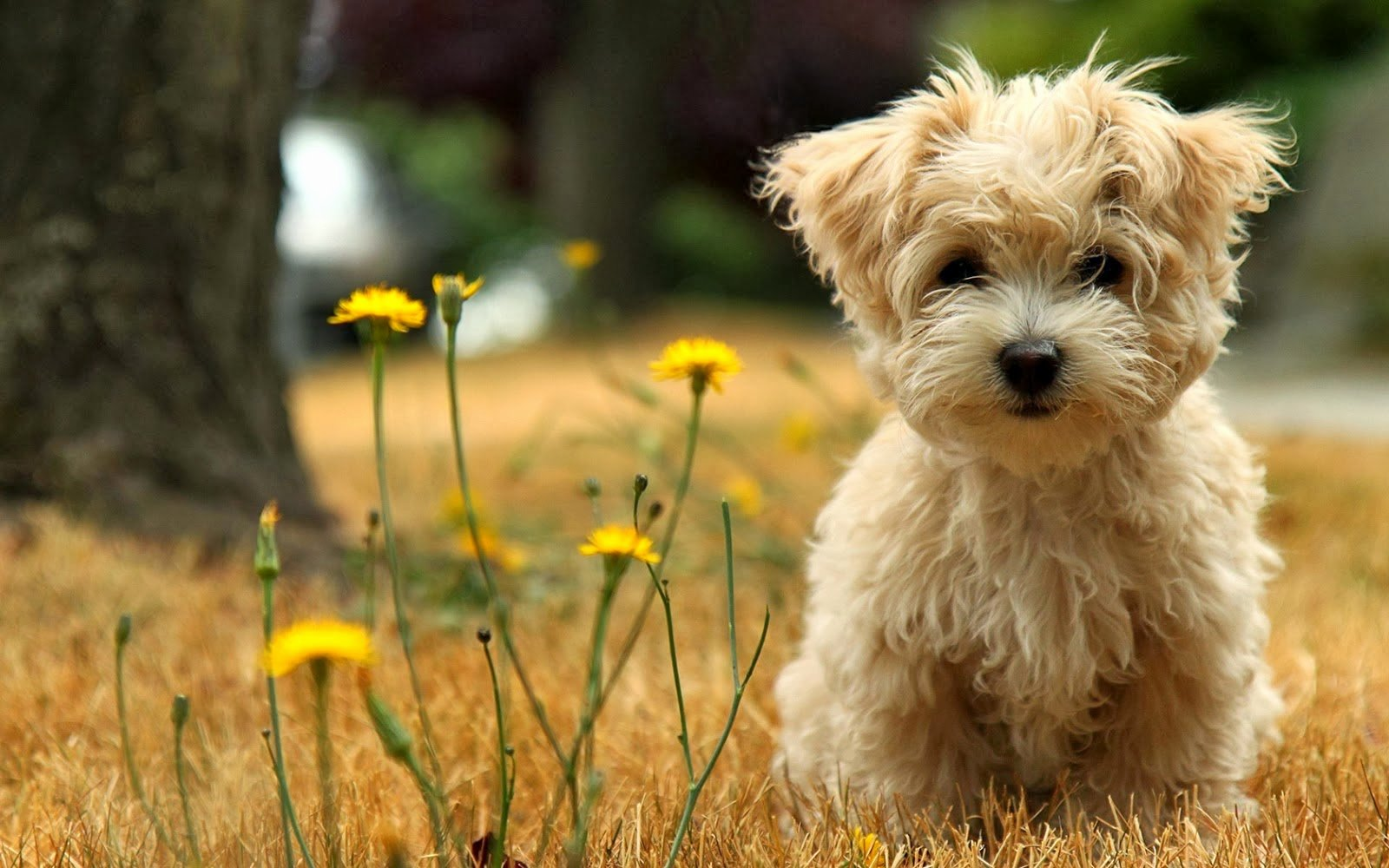 Dog Backgrounds for Desktop Best Of Cute Puppies Hd Wallpapers Hd Wallpapers Blog
