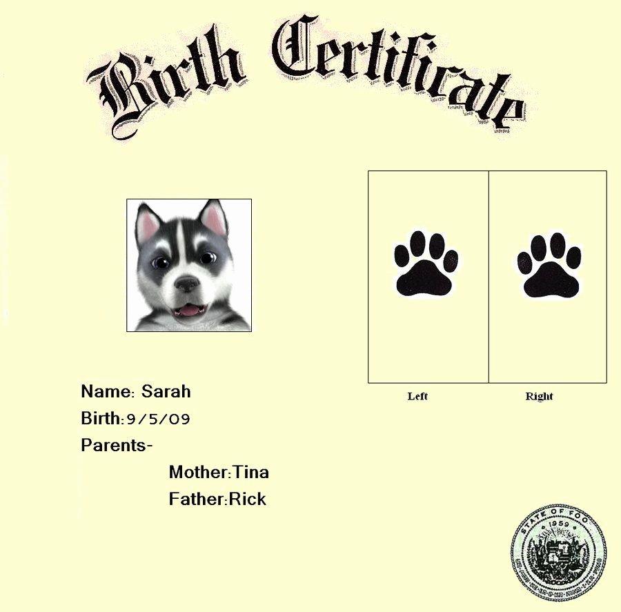 Dog Birth Certificate Template Beautiful Dog Birth Certificate