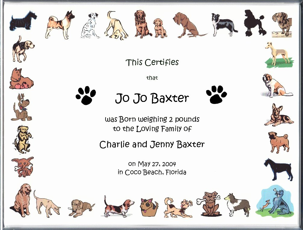 Dog Birth Certificate Template Unique Puppy Birth Certificate Template Pet Birth Certificate