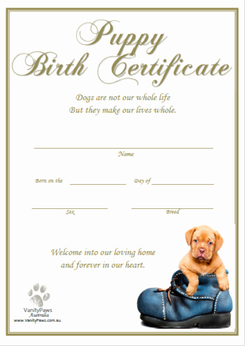 Dog Birth Certificate Templates Luxury Products – Vanitypaws Dog Collars
