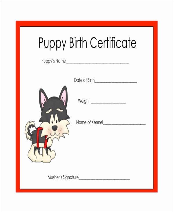 Dog Birth Certificates Templates Awesome Sample Certificate 47 Examples In Pdf Word Ai