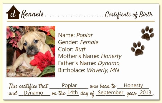 Dog Birth Certificates Templates Fresh Dog Birth Certificate Chestnut Has Been Adopted