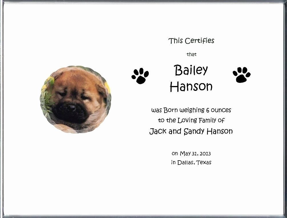 Dog Birth Certificates Templates Lovely Dog Birth Certificate