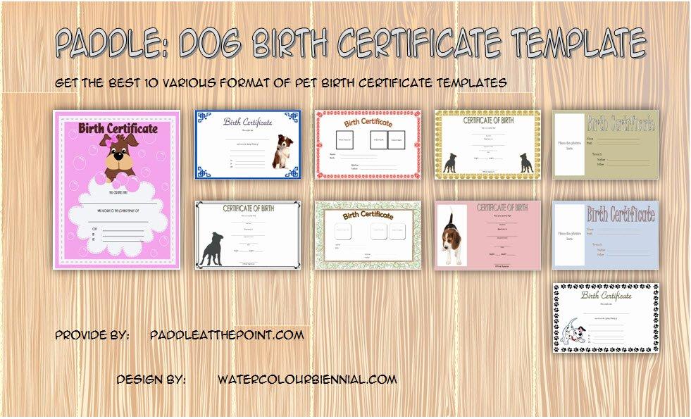 Dog Birth Certificates Templates Luxury Puppy Birth Certificate Template 10 Special Editions