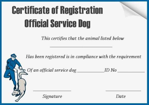 Dog Training Certificate Template Fresh Service Dog Certificates Template Free