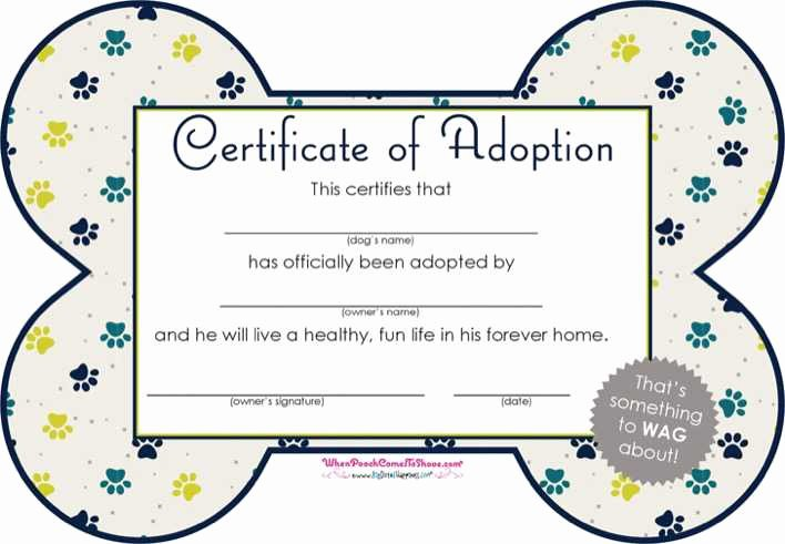 Dog Training Certificate Template New Download Pet Adoption Certificate for Free Tidytemplates