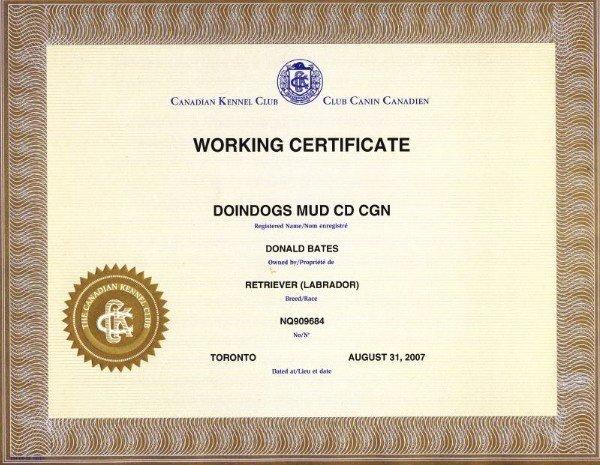 Dog Training Certificate Template Unique Doindogs Mud Cd Tt Cgn Wc