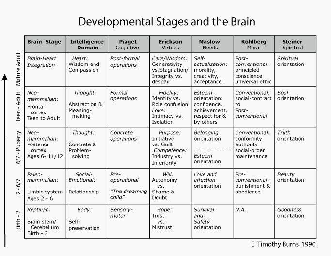 Erikson Stages Of Development Chart Pdf Elegant Developmental Stages and the Brain Birth Through Adult