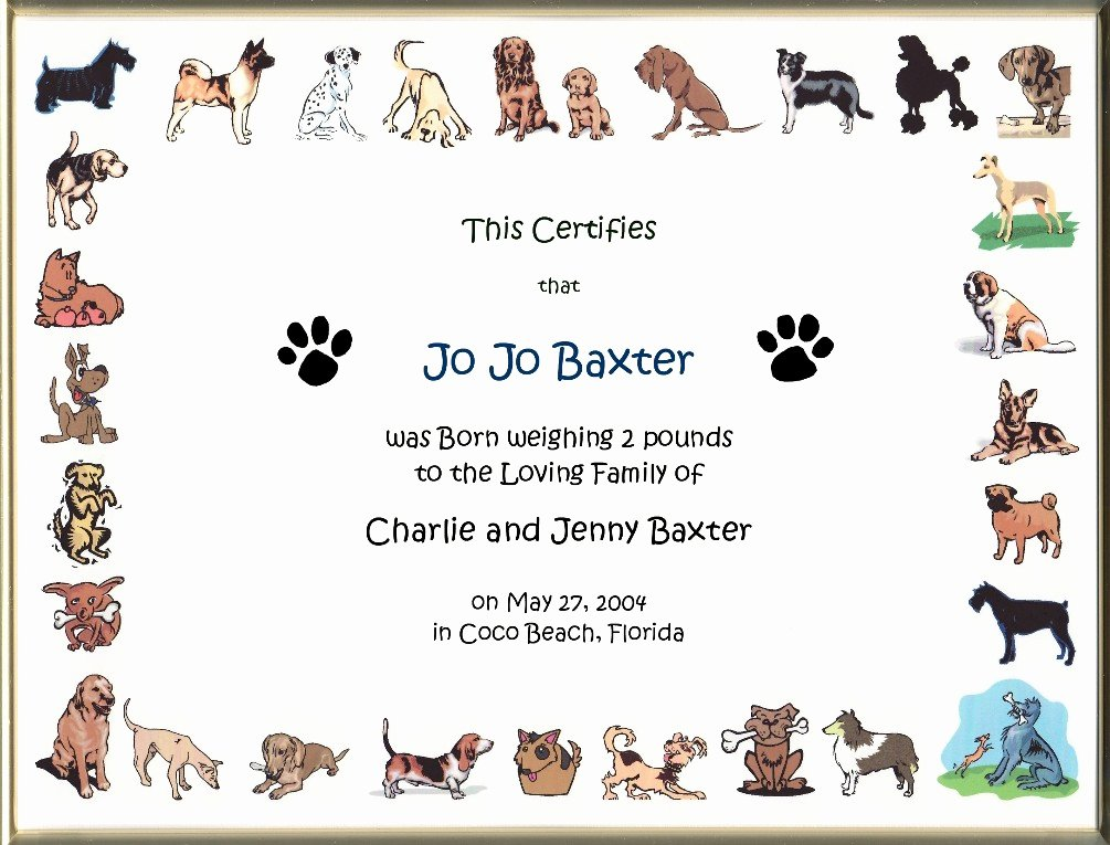 Free Printable Dog Birth Certificate Best Of Keepsake Dog Birth 8 5 X 11 Inch Certificate Cartoon Dog