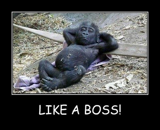 Funny Boss Day Pictures Fresh Like A Boss 18 Pics