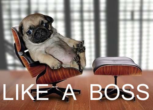 Funny Boss Day Pictures Inspirational 10 Ways to Celebrate Your Boss Like A Boss