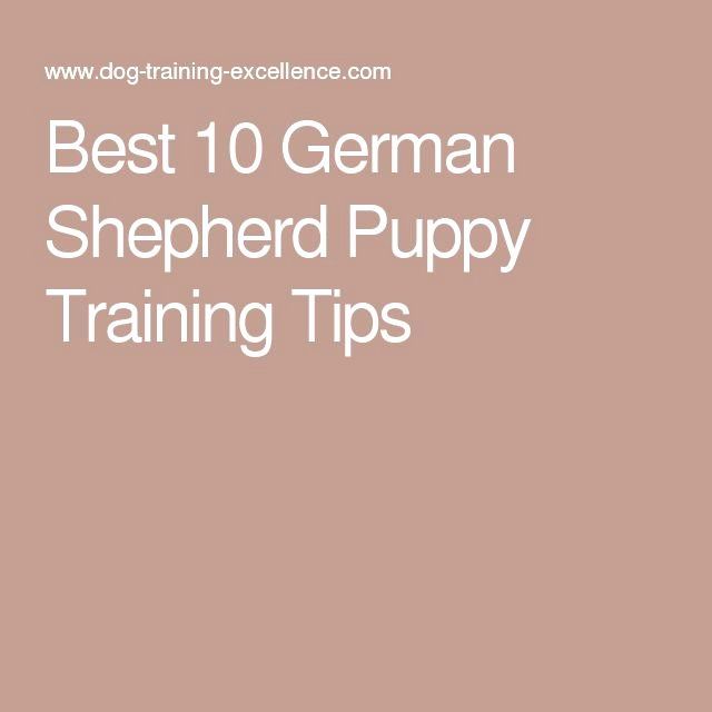 German Birth Certificate Template Best Of 25 Best Ideas About German Shepherd Puppy Training On