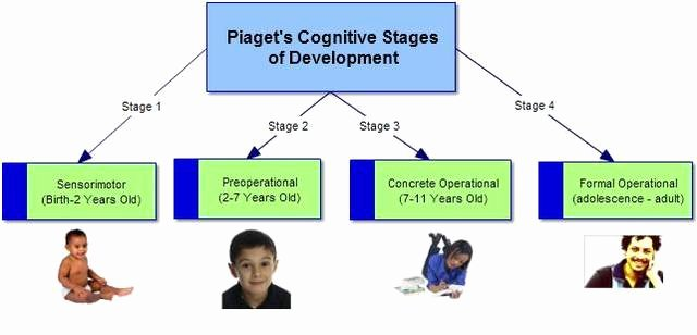 Piaget 4 Stages Of Cognitive Development Chart Luxury Pia S Stages Of Cognitive Development Timeline
