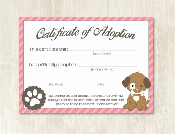 Puppy Birth Certificate Template Free Elegant 26 Sample Adoption Certificates In Illustrator