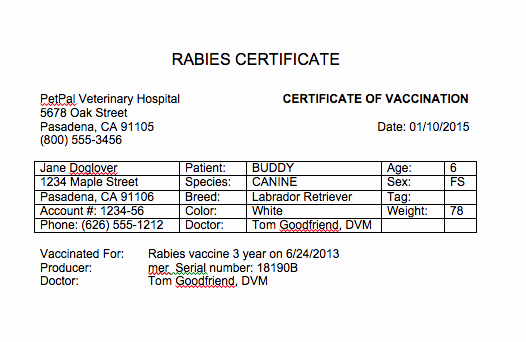 Rabies Vaccination Certificate Template Awesome Certificate Of Vaccination Template for Dogs
