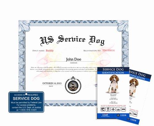 Service Dog Certificate Template Free Inspirational Service Dog Basic Plus Kit Us Dog Registry