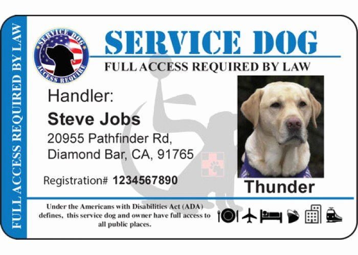 Service Dog Certificate Template Free Luxury Personalize Service Horizontal Handicap Background Dog Id