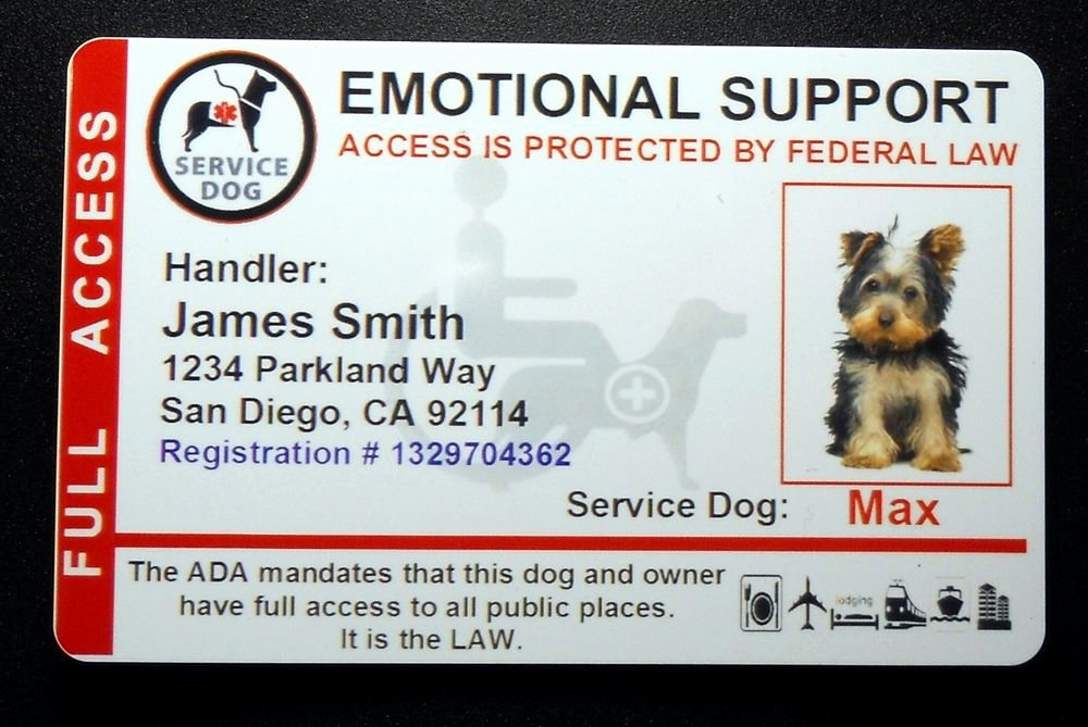 Service Dog Certificate Template Free Unique Holographic Emotional Support Animal Id Card Service Dog