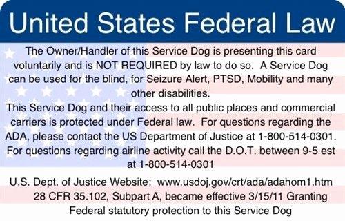 Service Dog Training Certificate Template Luxury Service Dog Certificate Printable