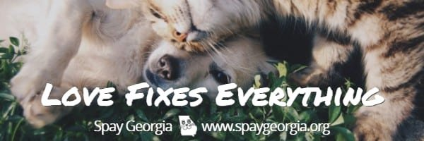 Spay Neuter Certificate Template Unique Wel E to Spaygeorgia Spaygeorgia Low Cost Spay