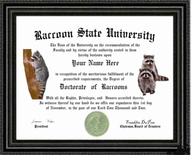 Wallet Size High School Diploma Elegant Raccoon Lover S Doctorate Diploma Degree Custom Made